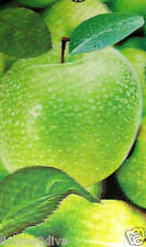 3D LENTICULAR GREEN APPLE AIR FRESHENER! 3 REFILLS! REUSE AS BOOKMARK! APPLES!