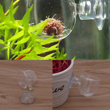 Aquarium Fish Tank Aquatic Plant Glass Cup Crystal Red Shrimp Holder With Sucker