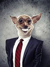 ART PRINT POSTER PHOTO DOG WEARING SUIT CHIHUAHUA SMILE FUNNY LFMP1276