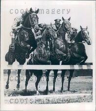 Quartet of Horses Jumping Together Press Photo