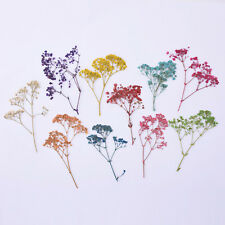 1Pack Natural Dried Flowers Baby's Breath Craft DIY Jewelry Making Mixd 10098049