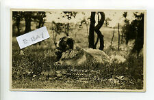 "Lynnfield MA Mass RPPC real photo ""Prince"" St Bernard at Suntaug Lake Inn"