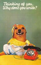 """""""Thinking of you..."""" Dog in Dress & Hat w/ Telephone Cute Funny Postcard 1962"""
