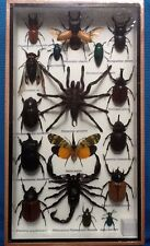 17 INSECT BEETLE DISPLAY SPIDER COLLECTION TAXIDERMY SCORPION CENTIPEDE  BEETLES
