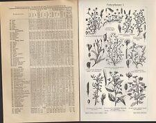 Lithografie 1907 Futterpflanzen. Futterbereitungs-Maschinen. Bastard-Hopfen-Klee
