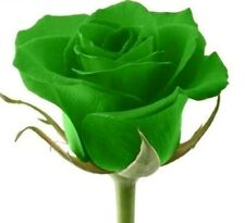 Rare Green Rose Seeds Rare Amazingly Beautiful Green Rose Flower 12 Seeds