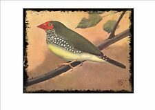 Ruficauda Waxbill Vintage  Wall Plaque Cage Bird Picture Sluis Aviary Sign