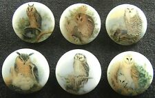 6 Czech Glass Decal Buttons #D125 - UNIQUE COLLECTION of 6 DIFFERENT OWLS