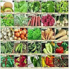 Hybrid Vegetable Seeds Combo Kit * for Kitchen/Terrace Gardening 16 Rare Items