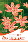 1 Pack 10 Blackberry Lily Rhizome Seed Belamcanda Chinensis Blackberry Lily E009