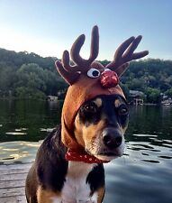 """Reindeer Antlers for large dogs with 16-20"""" collar size"""