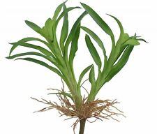 Cazwa Pierre vert Plante de décoration succulente artificielles