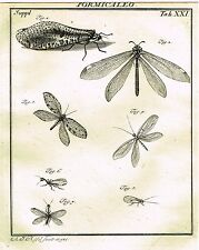 """Rosel's """"Insecten"""" - Copper Engraving - """"FORMICALEO - PLATE XXI"""" - 1740"""