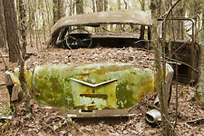 1957 Chevy being devoured in junk yard by nature 8 x 10 Photograph