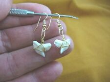"(s818-4) modern 1/2"" Tiger SHARK TOOTH gold wired Earrings Teeth sharks jewelry"