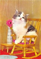 BF38755 cub on chair  cat chat animal animaux