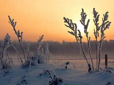 SNOW SUNSET FROST WINTER FIELD PHOTO ART PRINT POSTER PICTURE BMP215A