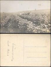 Brazil Cotton Field Farm old real photo PC pre 1920. Agriculture. Algodao