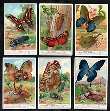 Tropical Butterflies & Beetles Cards Set 1935 Liebig Coleoptres Insect Papillon