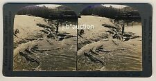 USA Florida ALLIGATOR & CROCODILE FARM * Vintage 1900s KEYSTONE Stereo Photo