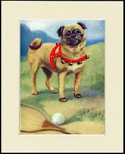 PUG LOVELY LITTLE DOG PRINT DOG WITH HARNESS AND BELLS MOUNTED READY TO FRAME