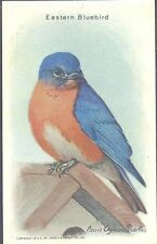 Church & Dwight - Useful Birds of America, 9th Series - 10 - Eastern Bluebird