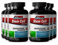 Wheat Grass Tablets - Stem Cell Activator 500mg - Lower Blood Pressure Caps 6B