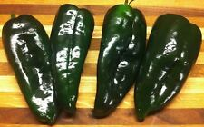25+ Heirloom Ancho Poblano Pepper Seeds, Organically Grown in My Garden