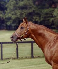 SECRETARIAT * BIG RED * 1973 TRIPLE CROWN WINNER HORSE RACE RACING 8X10 PHOTO