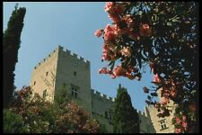067054 Oleander Bushes Crusader Fortress Rhodes A4 Photo Print