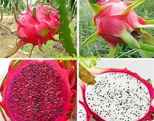 100 Graines Hylocereus Undatus Pitaya DRAGON FRUIT 50 Red + 50 White Flesh seeds