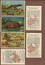 DINOSAURS: Complete Set of Scarce German ERDAL-KWAK Trade Cards (1927)C