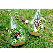 Air Plant Teardrop Houseplant Flower Glass Hanging Vase Home Garden Ornaments