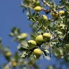 *** Arganöl, kaltgepresst, kbA (Argania spinosa), Marokko, 250ml