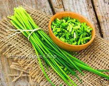 CHIVES Thin Chicks 1200 seeds 2gram/0,07oz. Fantastic garden balcony herb