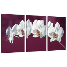 Split Canvas 3 Piece Multi Panel Triple Part Plum Purple Pictures 3116