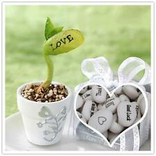 5 Pcs Magic Seeds/ Message Beans/ Birthday/ Gift for your loved ones