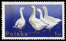 """POLAND 2098 (Mi2379) - Zootechnical Federation """"Geese"""" (pf44488)"""