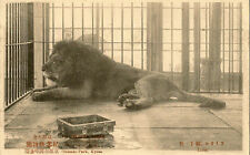 KYOTO ( Japan) : Lion in cage at Zoological Park  -Japanese publisher