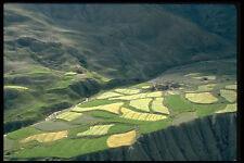 490000 Barley Fields Zanskar Ladakh India A4 Photo Print