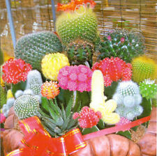 Durability Strong HOT 1 Bag 10 Seeds Mixture Of Cactus Flower Color Plant GTAU