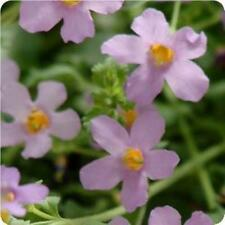 Bacopa - Blutopia - 5 Seeds