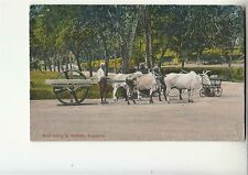1910's SINGAPORE-PC ROAD ROLLING by BULLOCKS-NEW-Colour-g15