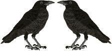 "Raven - American Black Crow - (SET OF 2) Iron On Patches - EACH 3 7/8""H (9.8cm)"