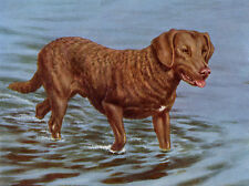 CHESAPEAKE BAY RETRIEVER DOG GREETINGS NOTE CARD DOG IN WATER