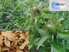 Largehead Atractylodes Rhizome bai zhu 100g dry herbs