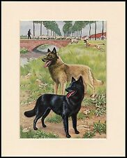 BELGIAN SHEPHERD TWO DOGS LOVELY DOG PRINT MOUNTED READY TO FRAME