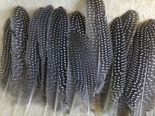 "25 Beautiful Spotted Guinea Hen Feathers 4-8"" Length"