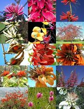 ERYTHRINA MIX, rare flower amazon CORAL TREE tropical plant shrub SEED 10 seeds
