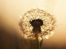 NATURE FLOWER PLANT DANDELION SEED SUN POSTER ART PRINT HOME PICTURE BB1376A
